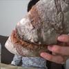 自宅で極上ハイジのチーズパン 炙ったチーズと黒パンを作ってみたので作り方を解説!!