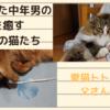 疲れきった中年男の心を癒す我が家の猫たち ~ノルウェージャンフォレストキャットとソマリ~