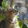 《猫の日特集》日本中のネコお写真で癒されよう