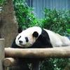 上野動物園に子連れで行くときのポイントとレポ