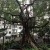 香港旅行二日目(6)。時の流れを感じる。荷李活道公園(ハリウッド公園)、仏具店