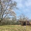 お花見キャンプがしたい!桜を観ながら至福のキャンプ@上和田緑地キャンプ場 2017.04.15〜04.16