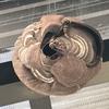 袋井市でテラス屋根に巣を作ったスズメバチを退治してきました!