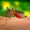 私は蚊に良く噛まれるタイプの人間です。