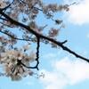 GWが終わったら暮らしを整えたい。春は家の片付けに最適な季節