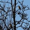 昭和記念公園の冬鳥たち