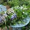 涼しいうちに庭仕事