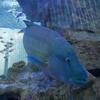 【写真付き展示生物リスト】Sony Aquarium 2019