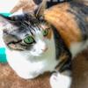 【愛猫日記】毎日アンヌさん#164
