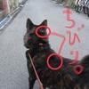 甲斐犬サンと「寒波2.11建国記念日ver.」の巻〜寒イノアカンネン。゚(゚´ω`゚)゚。