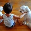 息子と愛犬二匹の仲