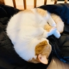 衣替え中の飼い主のダウンコートの上でお昼寝しちゃう愛猫