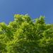 仙台市内某所の花々と新緑(2020年5月)