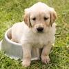 子犬のゴハンは数回に分けてが基本!牛乳を与えない理由とは
