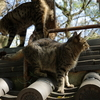 「野良猫はシャッター押そうとすると、かなりの高確率で、あっち向く」無敵のぬっこくんの日常21
