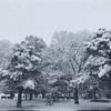 雪景色の朝