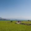 済州島(チェジュ島)春の祭り情報 #加波島青麦祭り #済州菜の花祭り