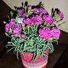 令和元年の「母の日」