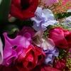 ⚘⚘⚘誕生日に春がきた⚘⚘⚘