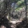 城山でリハビリ歩き