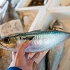 2021年3月23日 小浜漁港 お魚情報