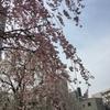 春の訪れ 2