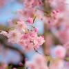 【一眼レフでおでかけ】卯月、空と桜。【写真11枚掲載】