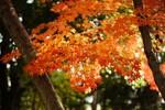 秋の紅葉を楽しむには、京都より奈良がおすすめな4つの理由とは?
