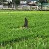 人柱になった山伏を祀った 小野の堰神社(厚木市)