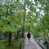 コロナの中、奈良、京都を巡る旅 ① 唐招提寺など