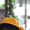 黄色い帽子:追記あり