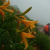 雨の中を行く白山1日目