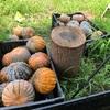 換金作物を専業栽培する農業の行く末