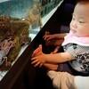 むろと廃校水族館に行ったよ