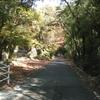 山の中腹の神社を目指して 11月16日