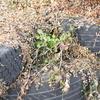 廃タイヤによる土留め、と、蓄熱効果