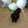 今日の黒猫モモ&白黒猫ナナの動画ー830