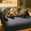 iPhone Ⅹのポートレートモードで猫のかわいい写真を撮りたいのにあいつらすぐすりよってくる問題