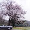 桜ドライブ2019(佐倉城址公園)