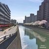 船橋市の桜