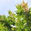 【写真】初夏の樹々