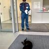 猫と警備員、1カ月ぶりの攻防! 尾道市立美術館