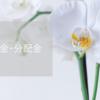 【2021年4月】配当金・分配金まとめ