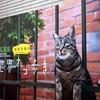 「岩合光昭の世界ネコ歩き」写真展へ行ってきた‼