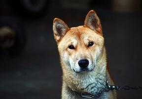 韓国語で動物の名前を知ろう!動物がもつ意味や諺も
