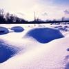 【一日一枚写真】冬の野幌森林公園 Part.8【スマホ】