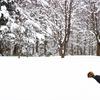 北海道といえば雪。雪上スラックライン。