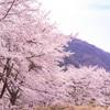 虎山弐千本桜