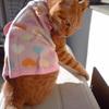 キビコレ 〜胃ろうチューブ用 お洋服コレクション