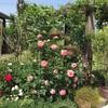 夏に向けてお花のメンテナンス